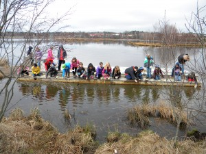 Students on the critter dipping dock searching for invertebrates and other critters in the marsh.
